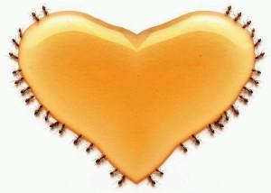Keajaiban Madu Pada Penyakit Jantung