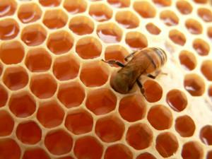 pengobatan-penyakit-dengan-madu-lebah-2